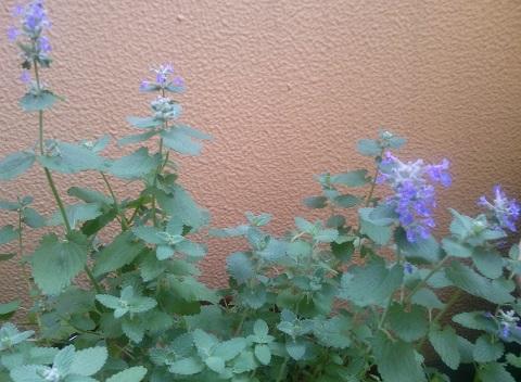 gardening368.jpg