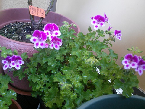 gardening375.jpg