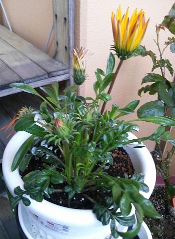 gardening378.jpg
