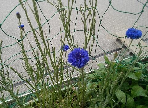 gardening380.jpg