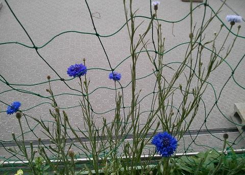 gardening382.jpg