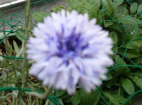 gardening383.jpg
