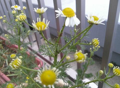 gardening386.jpg