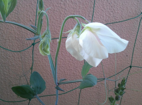 gardening391.jpg