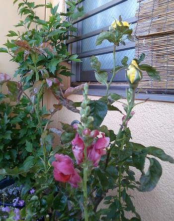 gardening401.jpg