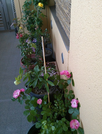 gardening402.jpg