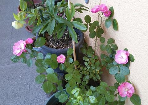 gardening403.jpg