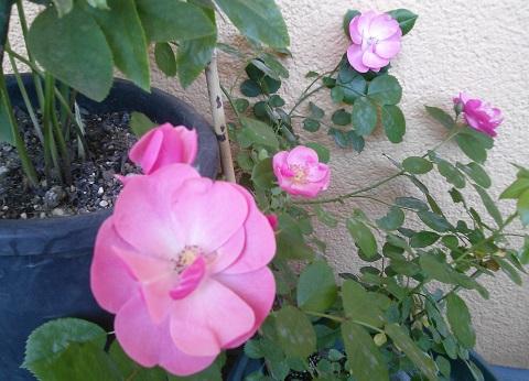 gardening404.jpg