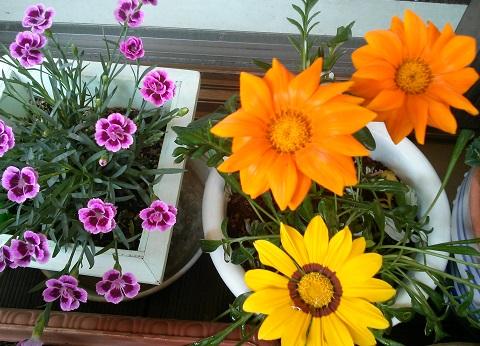gardening416.jpg