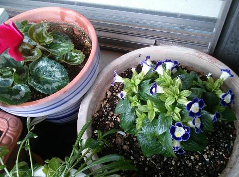 gardening417.jpg