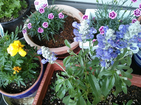 gardening418.jpg
