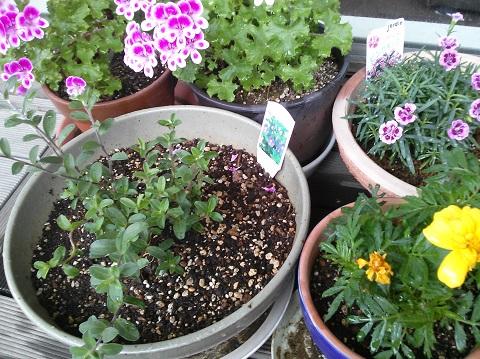 gardening419.jpg