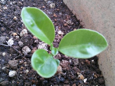 gardening424.jpg