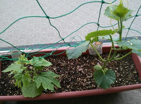 gardening425.jpg