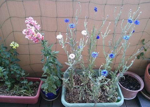 gardening429.jpg