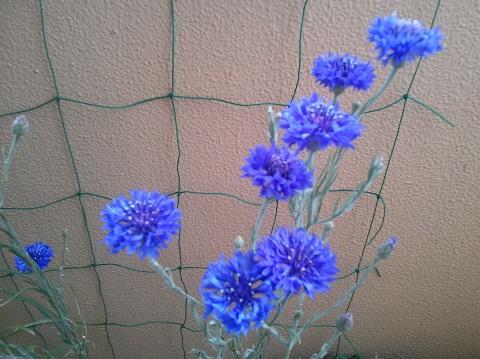gardening431.jpg