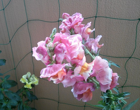 gardening434.jpg