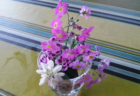gardening436.jpg