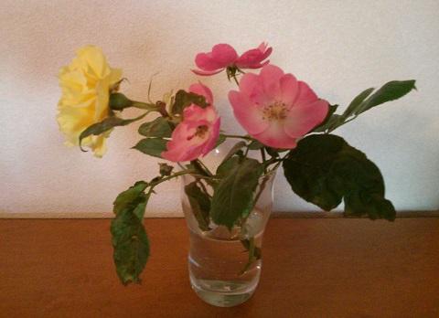 gardening440.jpg