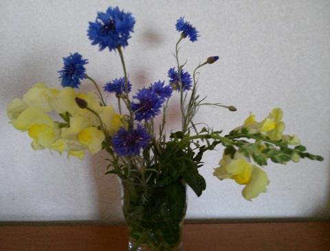 gardening444.jpg