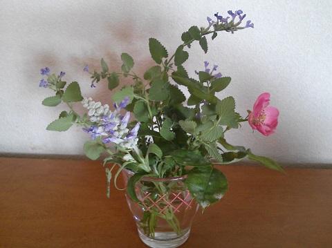gardening445.jpg