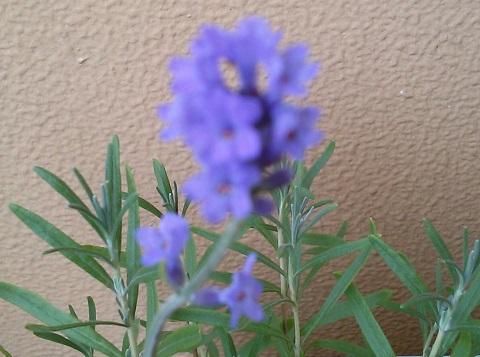 gardening446.jpg