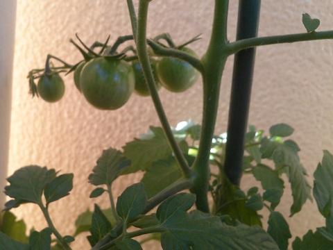 gardening457.jpg