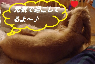 s-今日のア