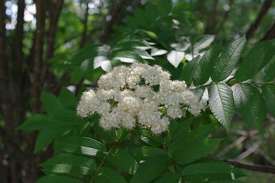 s-おっことの花