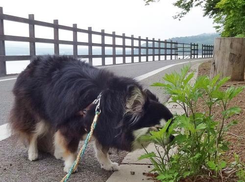 山中湖・お散歩