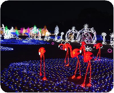 大阪城3Dマッピングイルミフラミンゴ