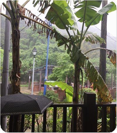二叭子植物園雨
