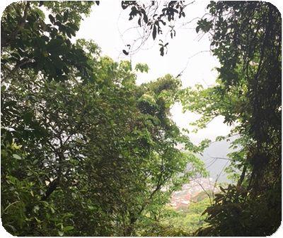 二叭子植物園桐花木