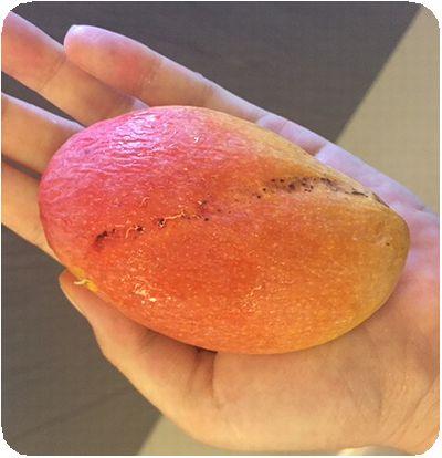 小さいマンゴー