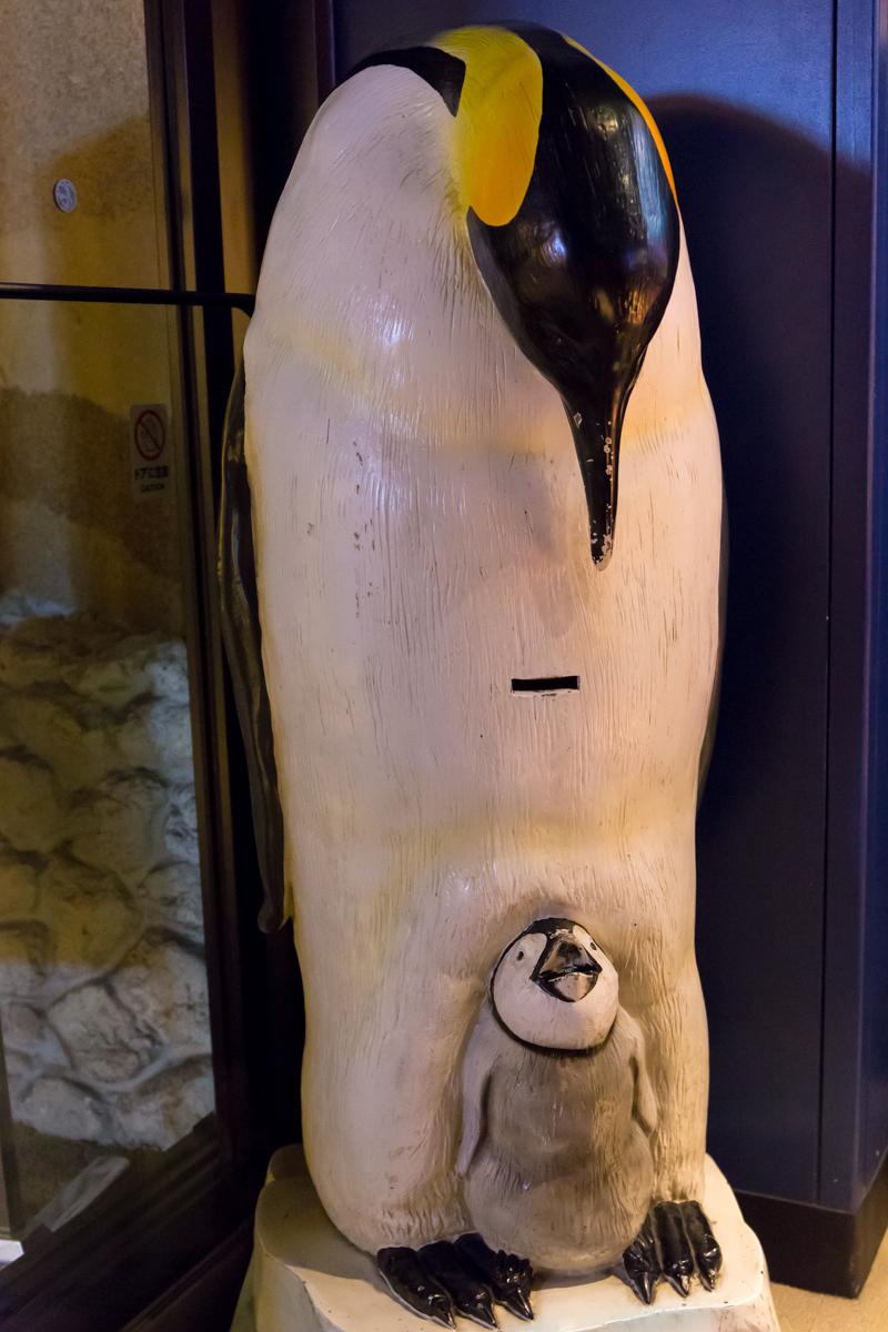 池袋水族館貸切1(9)