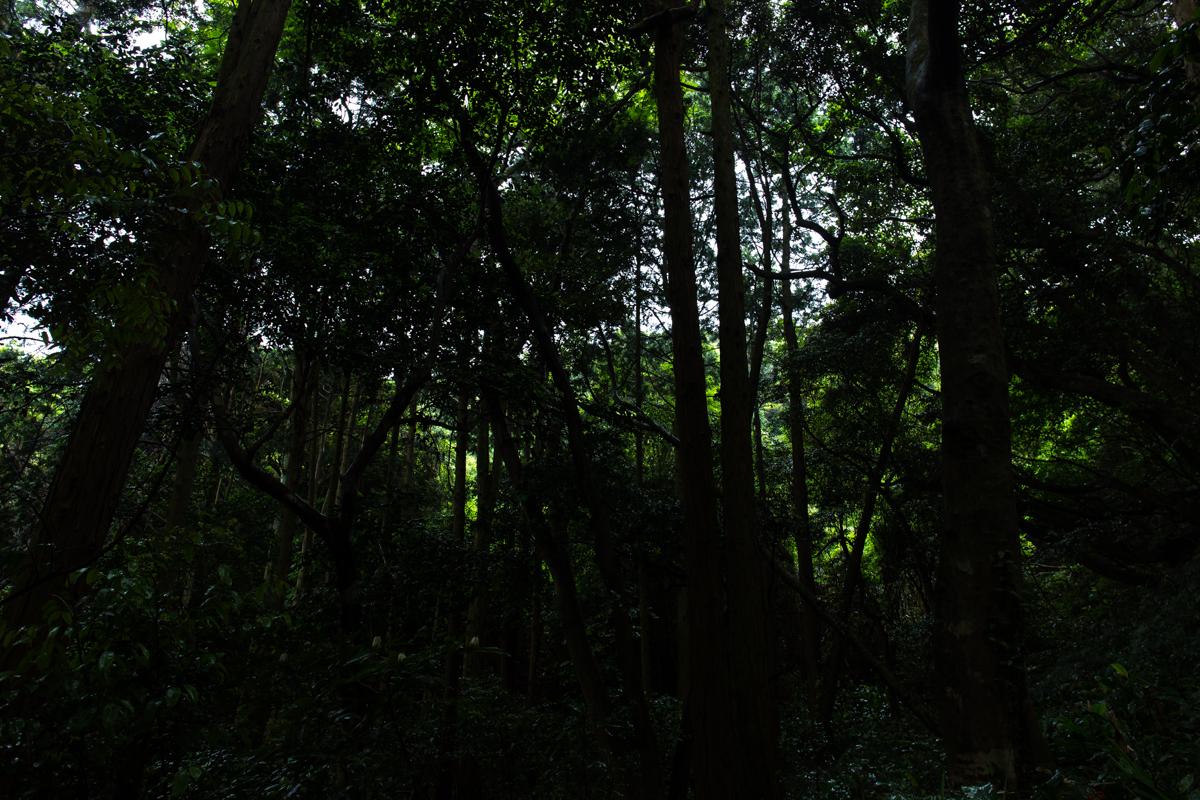 新島トライアスロン_4(11)