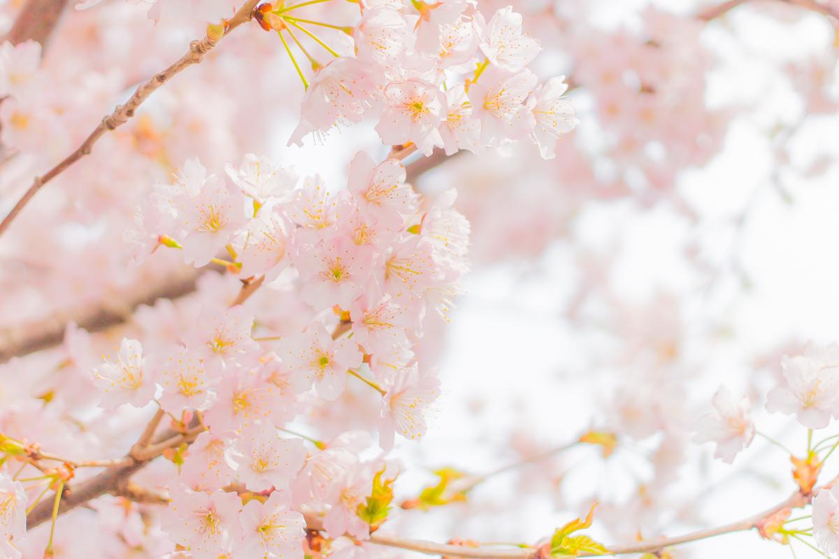 春待つ息吹(4)