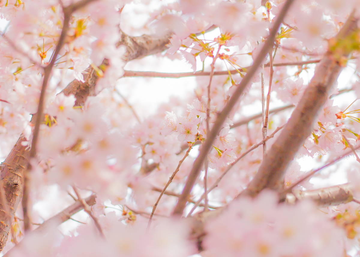 春待つ息吹(6)