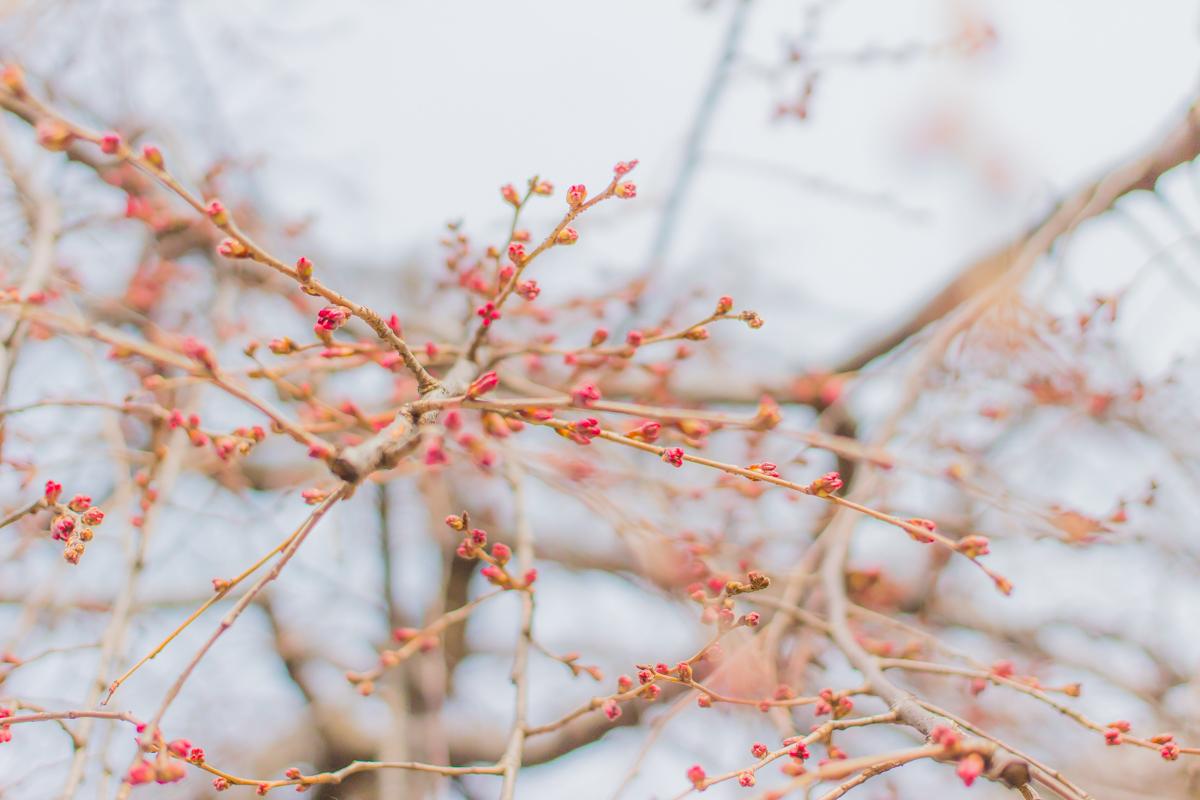 春待つ息吹(1)