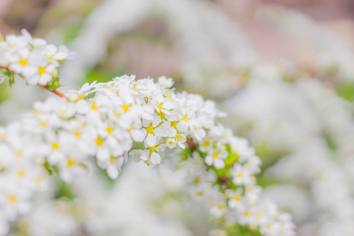 春待つ息吹(3)