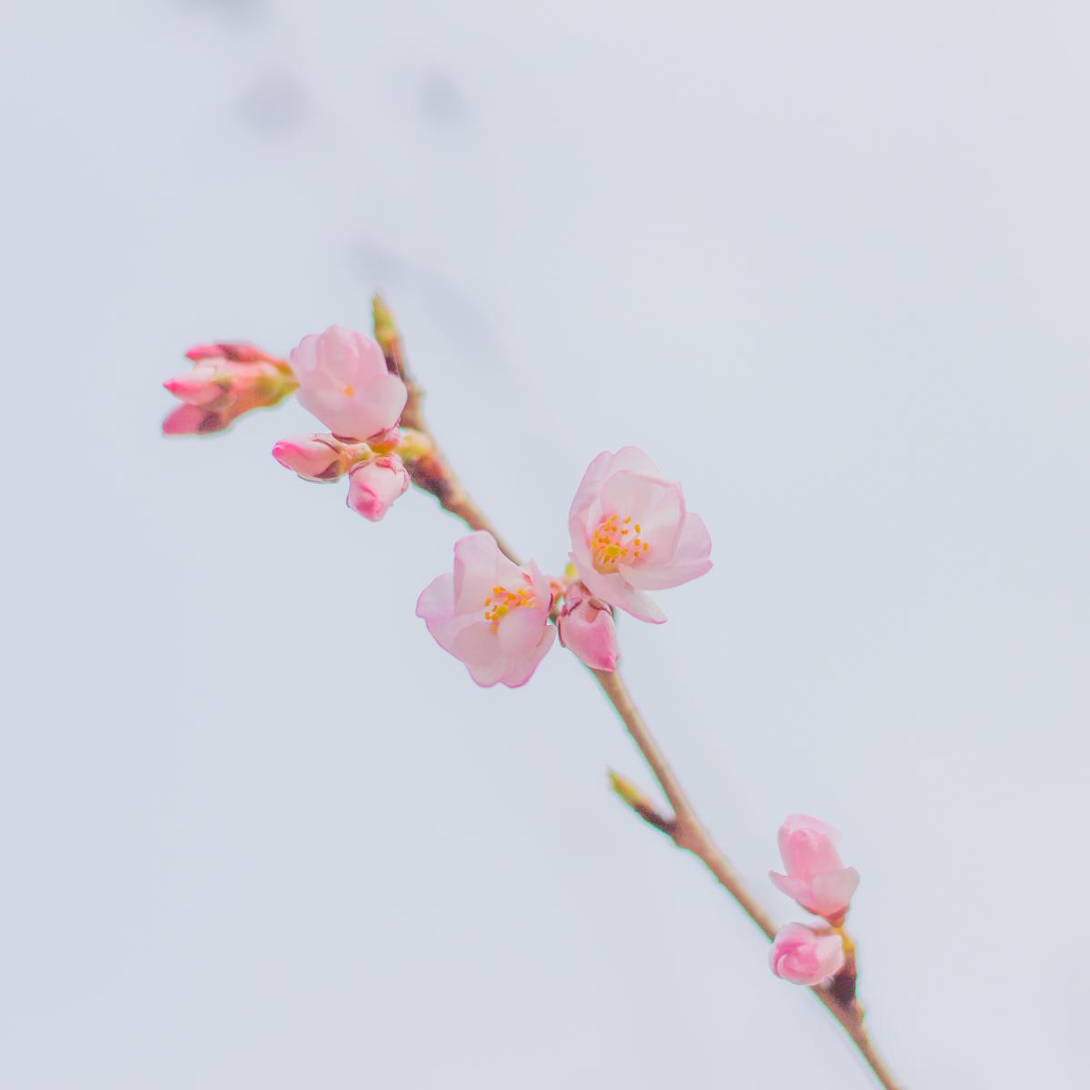 春待つ息吹(2)