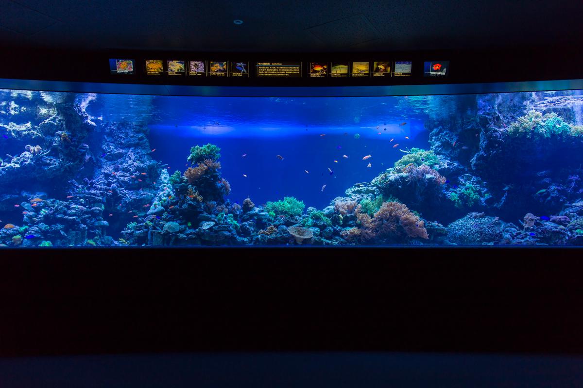 池袋水族館貸切1(23)