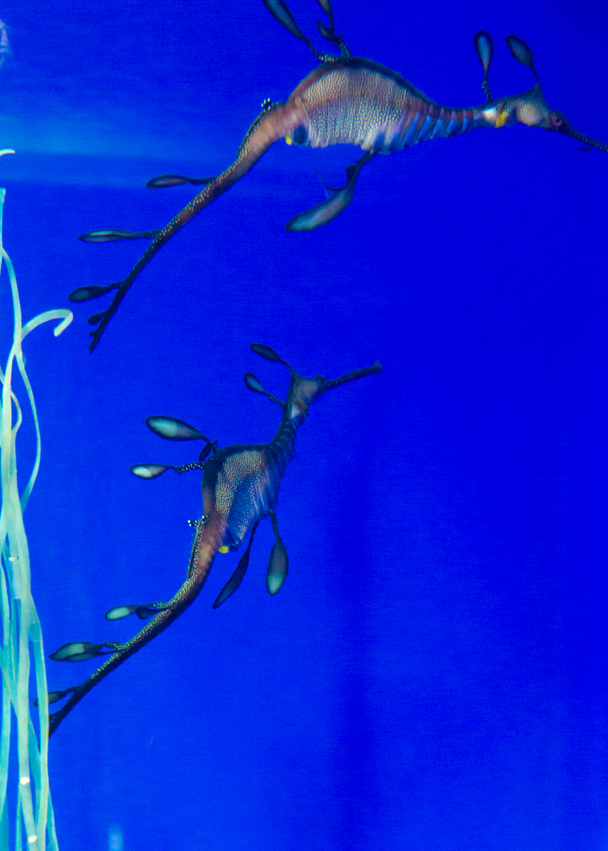 池袋水族館貸切1(25)