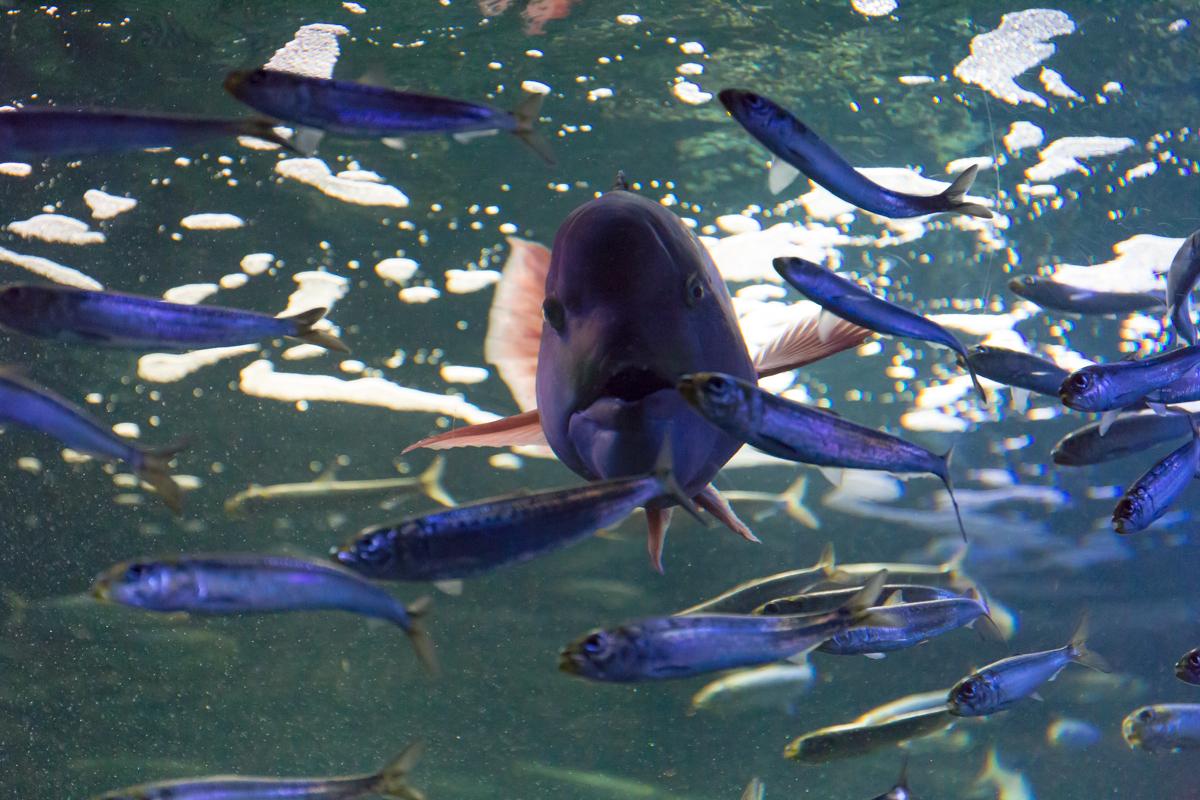 池袋水族館貸切1(28)