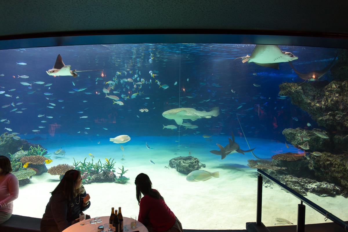 サンシャイン水族館貸切3(1)