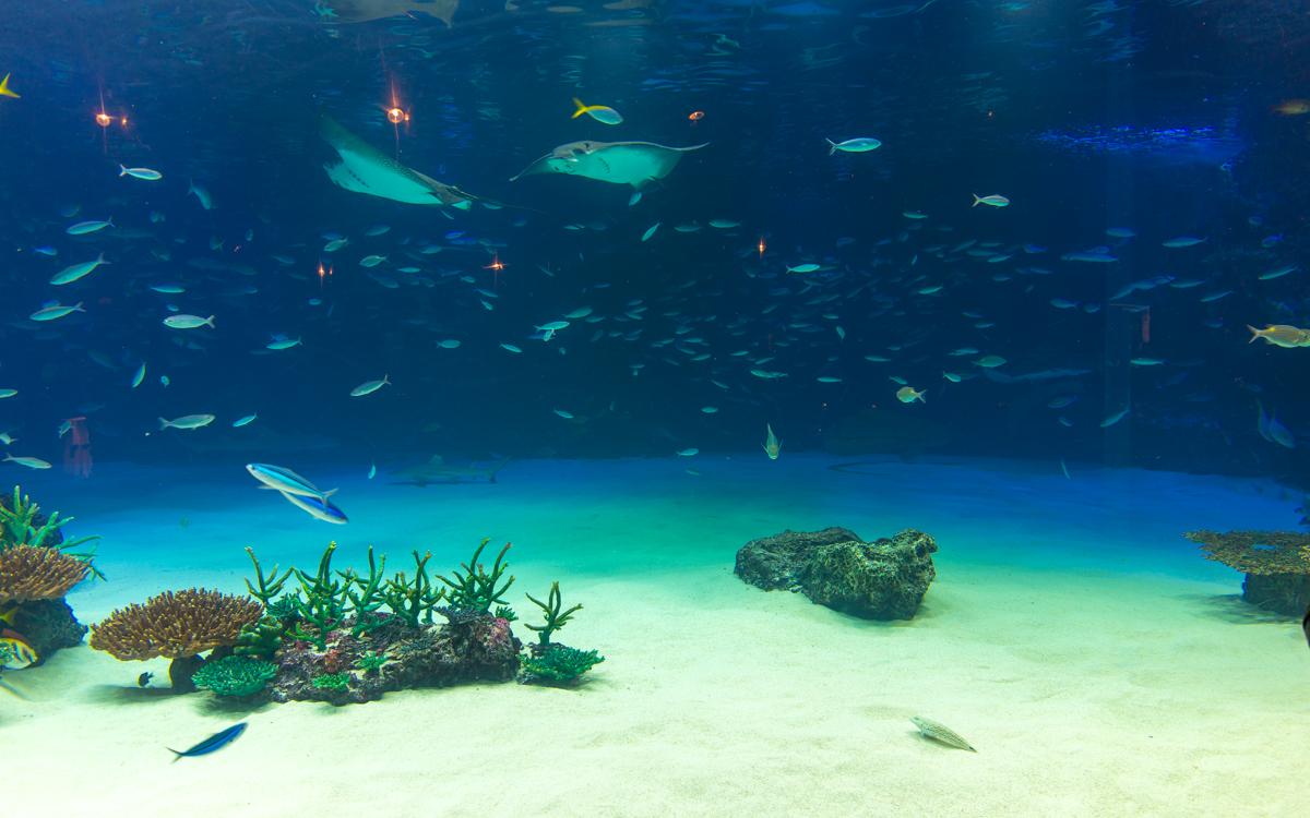 サンシャイン水族館貸切3(2)