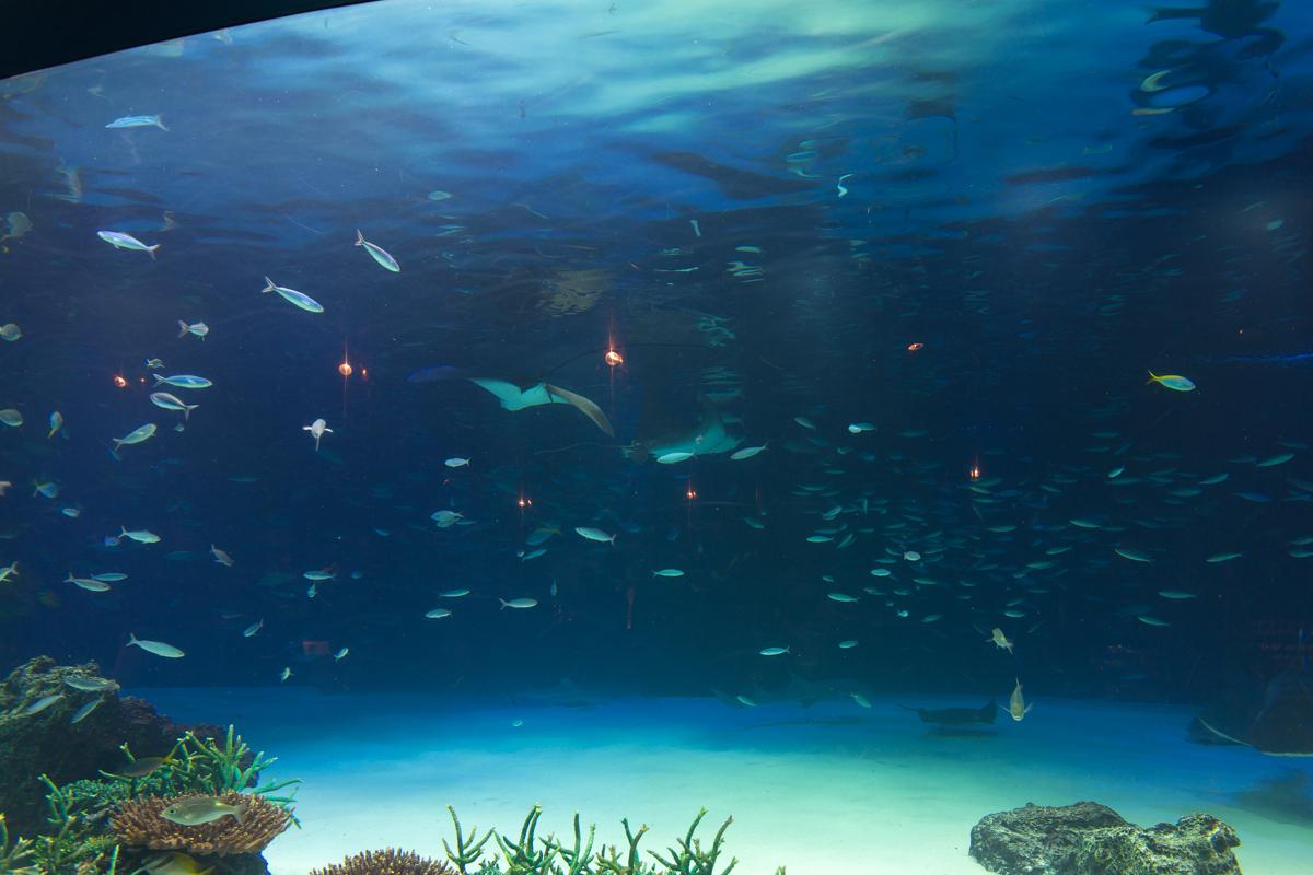 サンシャイン水族館貸切3(3)