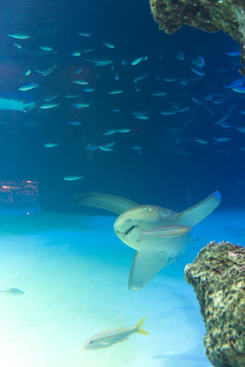 サンシャイン水族館貸切3(4)