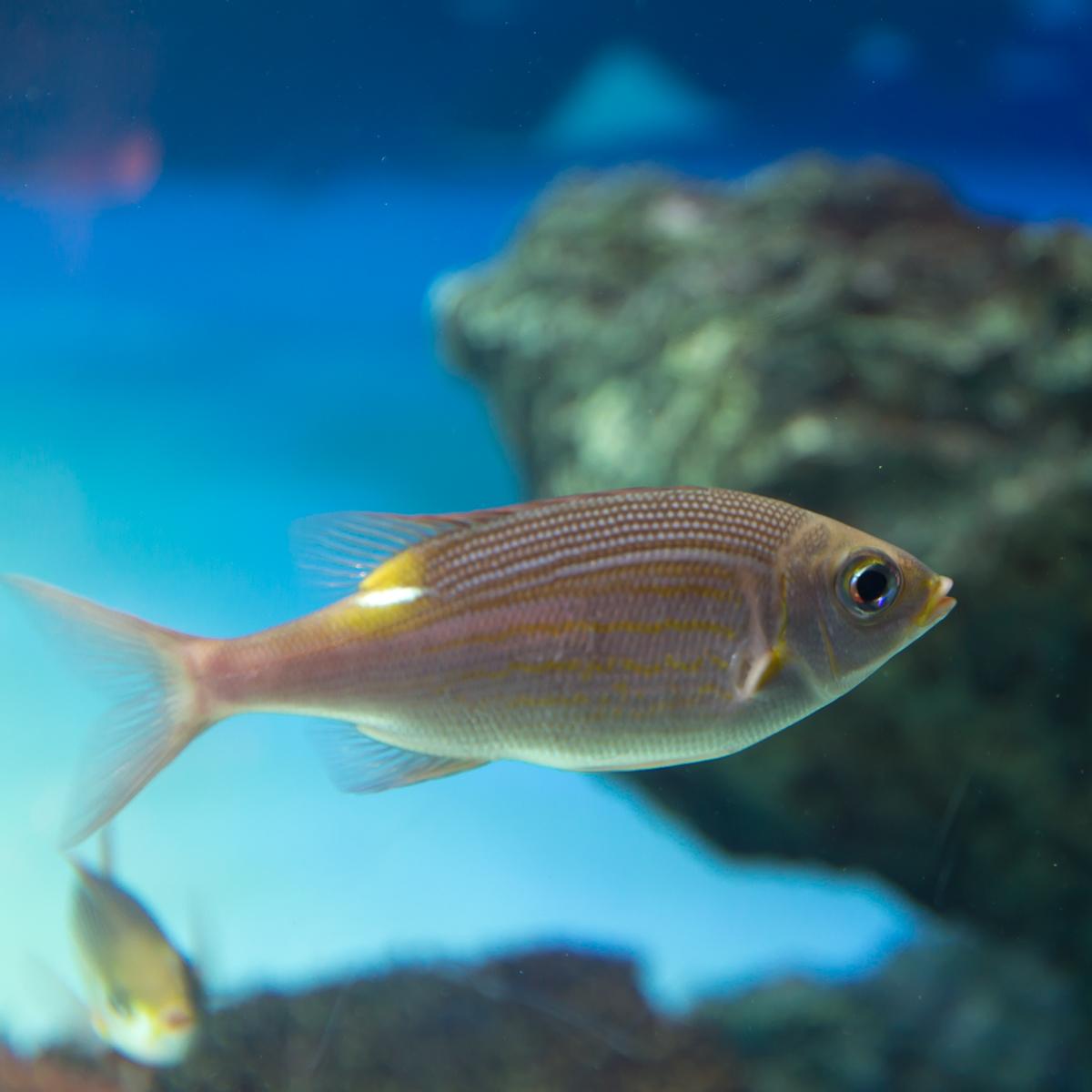 サンシャイン水族館貸切3(5)