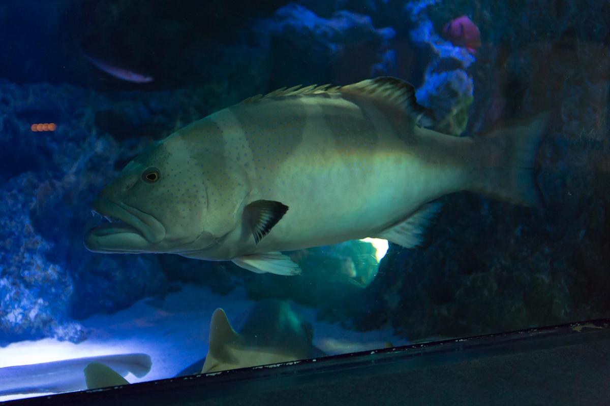 サンシャイン水族館貸切3(11)
